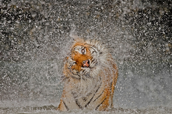 2012 National Geographic Photography Contest Winners